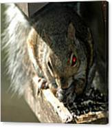 Red Eyed Demon Squirrel Canvas Print