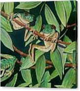 Red Eyed Tree Frogs IIi Canvas Print