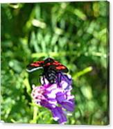 Red Fly Canvas Print