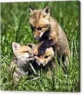 Red Fox Babies - D006647 Canvas Print