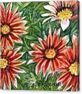 Red Gazanias Canvas Print