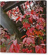 Red Grape Leaves And Beams Canvas Print