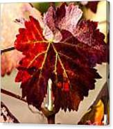 Red Grapeleaves Canvas Print