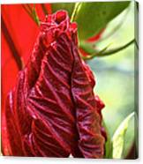 Red Hibiscus Torch Canvas Print