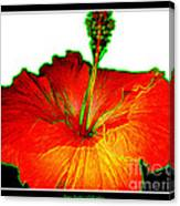 Red Hibiscus With Special Effects Canvas Print