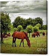 Red Horses Canvas Print