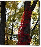 Red Ivy Climb Canvas Print