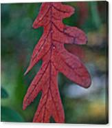 Red Leaf Hanging Canvas Print