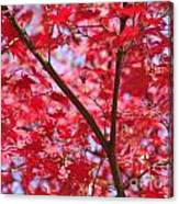 Red Leaves And Branch Canvas Print