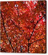 Red Leaves Black Branches Canvas Print