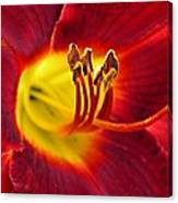 Red Lily Center 3 Canvas Print