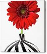 Red Mum In Striped Vase Canvas Print