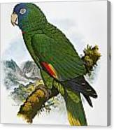 Red-necked Amazon Parrot Canvas Print