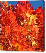 Red Orange Yellow Autumn Leaves Art Prints Vivid Bright Canvas Print
