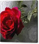 Red Paris Rose Canvas Print