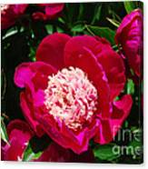 Red Peony Flowers Series 3 Canvas Print