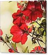 Red Petunias Canvas Print