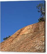 Red Pine Tree Canvas Print