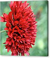 Red Plume Canvas Print