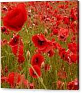 Red Poppies 4 Canvas Print