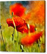 Red Poppy Flowers 01 Canvas Print