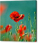 Red Poppy Flowers 06 Canvas Print