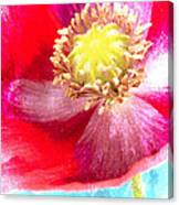 Red Poppy On Blue Canvas Print