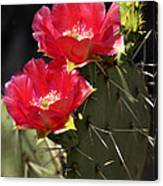 Red Prickly Pear Cactus  Canvas Print