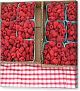 Red Raspberries Are Here Canvas Print