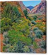 Red Rock Park Spring Flowers Canvas Print