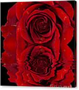 Red Rose Dew Canvas Print
