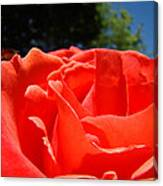 Red Rose Flower Fine Art Prints Roses Garden Canvas Print