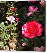 Red Rose In The Market Canvas Print
