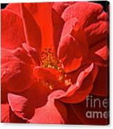 Red Rose Summer Canvas Print