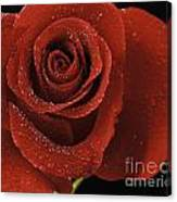 Red Rose With Water Drops Canvas Print