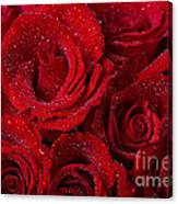 Red Roses And Water Drops Canvas Print