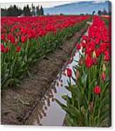 Red Rows Canvas Print