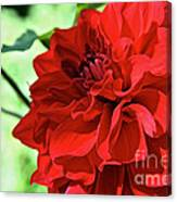 Red Ruby Dahlia Canvas Print