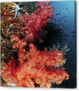 Red Soft Corals And Blue Leather Sea Canvas Print