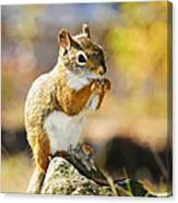 Red Squirrel Canvas Print