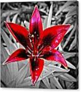Red Star Lily Canvas Print