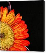 Red Sunflower IIi Canvas Print
