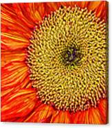 Red Sunflower Iv Canvas Print