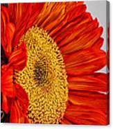 Red Sunflower V Canvas Print
