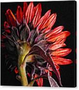 Red Sunflower X Canvas Print