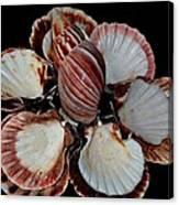 Red-toned Seashells Canvas Print