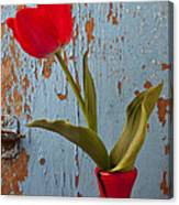 Red Tulip Bending Canvas Print