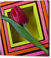 Red Tulip In Box Canvas Print