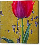 Red Tulip With Yellow Wall Canvas Print