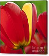 Red Tulips 1 Canvas Print